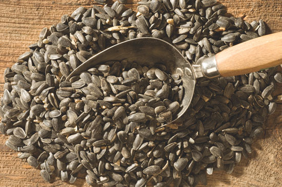 Semenke suncokreta - sastav, nutritivna vrednost i lekovita svojstva